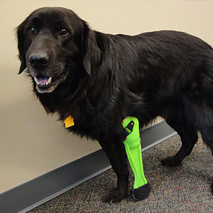 Prosthetic Legs for Dogs